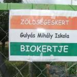 A csorvási Gulyás Mihály Iskola tanulókertjének a megtekintése