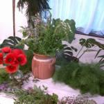 Biokonyha: Gyógy- és fűszernövények a mindennapjainkban (2. kép)