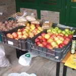 Biopiac Békéscsabán a Körösök Völgye Natúrpark Egyesület bemutató-házában (7. kép)