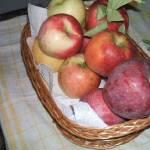 Érik az alma Gáncse Mihály kertjében Kétegyházán (10. kép)