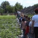 Iskolások látogatása Major Pál csorvási kertjében (7. kép)