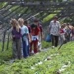 Iskolások látogatása Major Pál csorvási kertjében (13. kép)