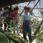 Iskolások látogatása Major Pál csorvási kertjében (22. kép)