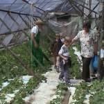 Iskolások látogatása Major Pál csorvási kertjében (24. kép)