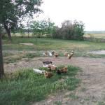 Kirándulás Budaörsön a Káptalan Évelő Kertben és Kerekegyházán a Rendek-tanyán (13. kép)