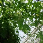 Szakmai kirándulás a Krisna-völgyben és Fajszon 9