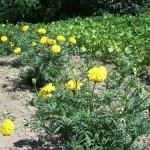 A kert növényei